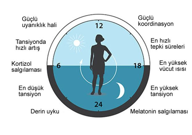 vucudun-biyolojik-saati-abd-bilim-nobel-2.jpg