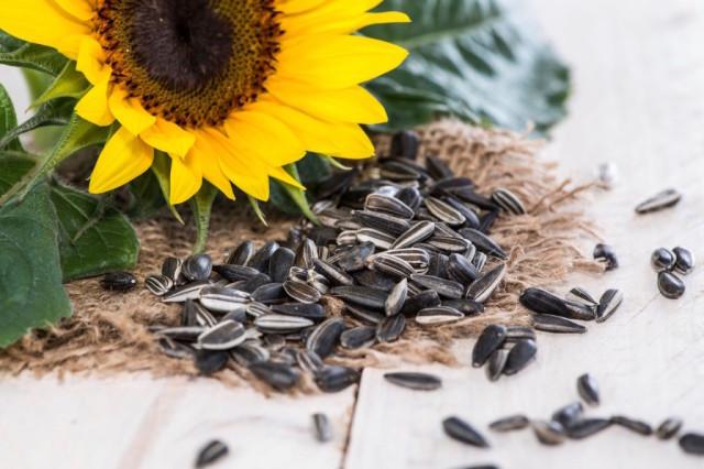 benefits-of-sunflower-seeds_1-1024x683.jpg