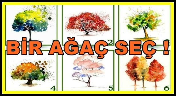 agac-testi-1.jpg