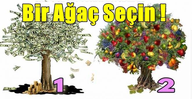 agac-3.jpg