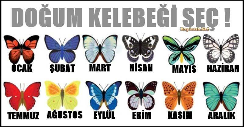 KELEBEK-1.jpg