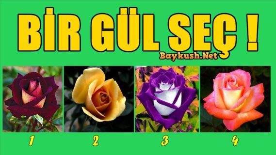 gul-1.jpg